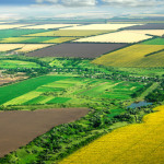 agricultural_fields